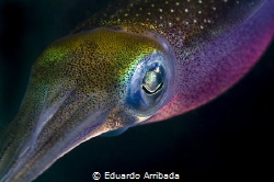 Squid in the dark by Eduardo Arribada